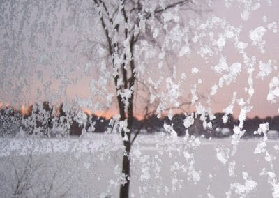 View of tree and pond from frosted window